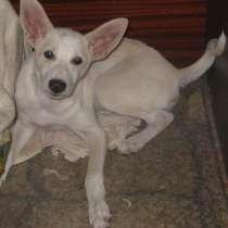 Маленький беленький щенок Малька ищет себе друга, в г.Луганск