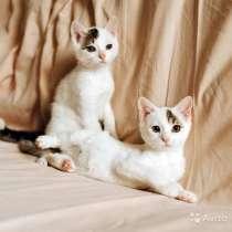 Красавцы-котята, ласковые, умненькие детки в дар, в г.Москва
