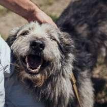 Пёс Хуан, в Краснодаре