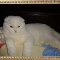 Вислоухий кот с родословной, в г.Киев
