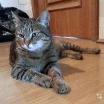 Ласкуша Ева, нежная домашняя молодая кошечка в дар, в г.Москва