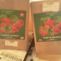 Семена и грунт клубники, в г.Орск