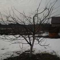 Обрезка плодовых деревьев, в Москве