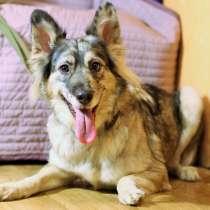 Прекрасная редкая собака ищет новый дом, в г.Санкт-Петербург