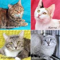 Котятки из приюта всех мастей. Мохнатым шалунам нужен дом, в Москве
