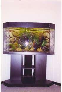 Обслуживание аквариумов, в г.Симферополь
