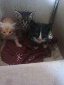 Трое маленьких котиков Ждут своих добрых хозяев, в г.Шымкент
