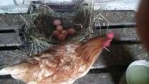 Яйца домашние куриные диетические, в г.Новомосковск