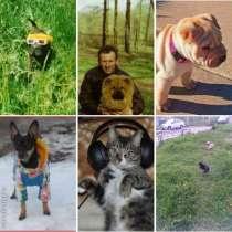 Домашняя зооняня для собак, кошек, в Москве
