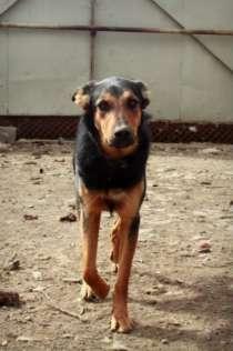 Отдам даром Собака-подросток  Маша в добрые руки., в Челябинске