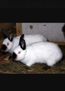 Кролики, в Грозном