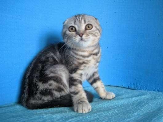 Кошечка с ярким контрастным мраморным окрасом