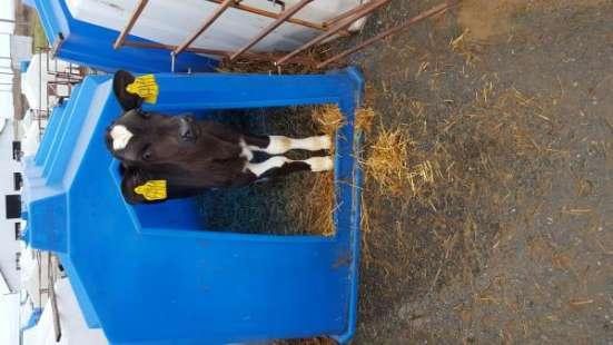 Молочно-животноводческая ферма на 2000 коров с молодняком на базе фермерского хозяйства