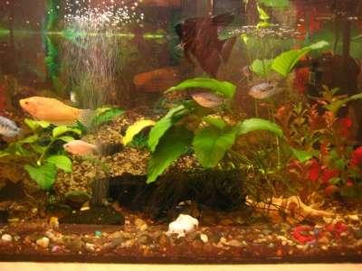СРОЧНО !!! 2 аквариума действующих в Москве Фото 5