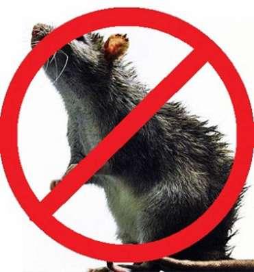 Уничтожение тараканов, клопов, муравьёв. А так же грызунов