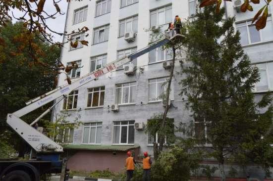 Удаление деревьев и зеленых насаждений по России под «Ключ»