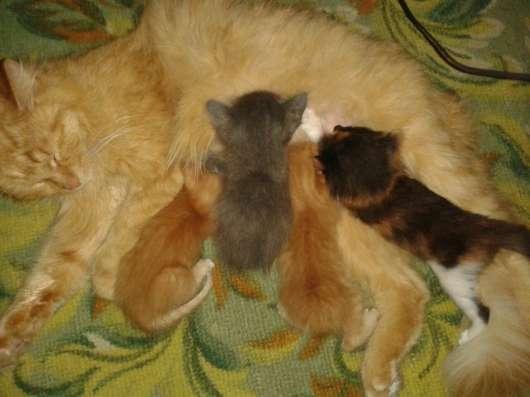 Отдам котят в хорошие руки в г. Усть-Каменогорск Фото 1