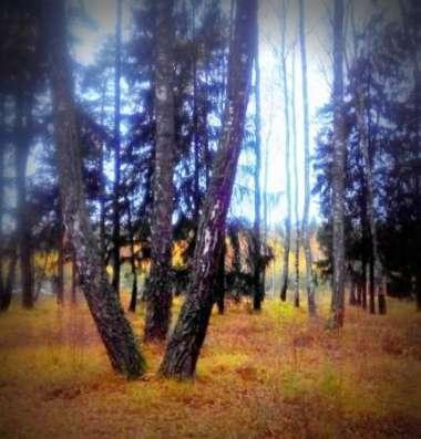 Большие хвойные деревья. 15 соток. Центральные коммуникации. Город Звенигород.