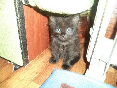 котята в Чебоксарах Фото 1