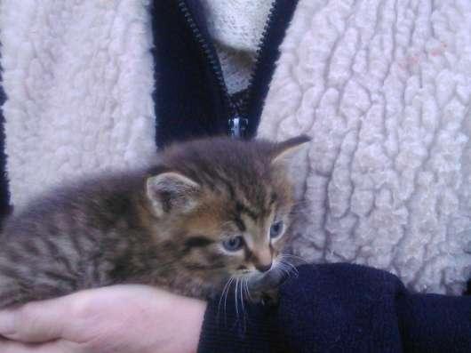 Трёхцветный котёнок ищёт хозяина в Москве Фото 2