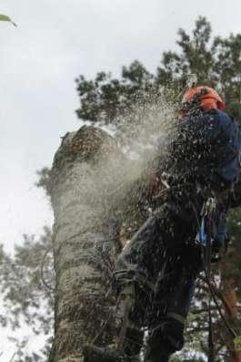 Убрать дерево в Раменском, Кратово, Быково, Удельной, Жуковском