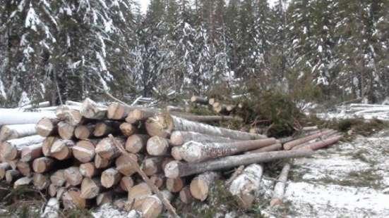 Лесозаготовительная база в Костромской области