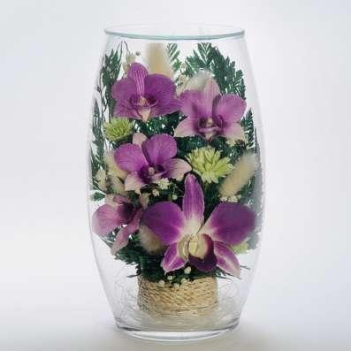 Орхидеи фиолетовые тёмные