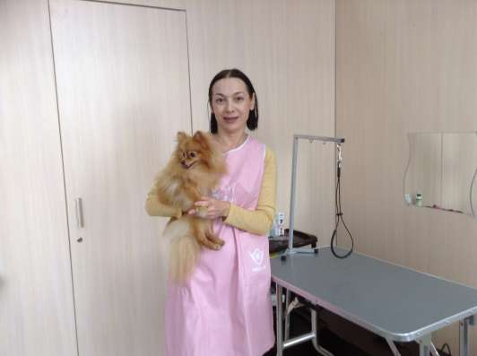 Стрижка и уход за декоративными собаками в Ростове-на-Дону Фото 2