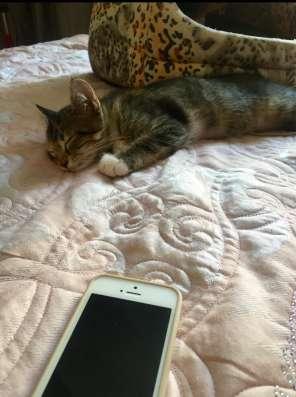 Милый котёнок в ласковые ручки, с добрым сердцем в г. Нальчик Фото 2
