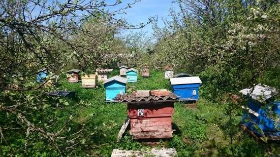 Продам пчел, ульи, мед Клинский район