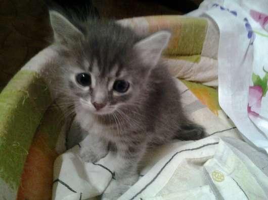 Шикарные котята в дар в г. Самара Фото 3