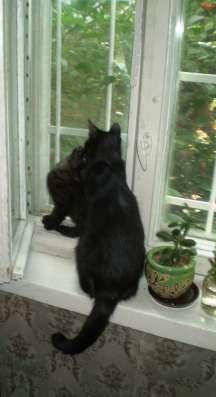 Котёнок (девчонка) ищет дом