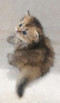 Удивительные котята в г. Тимашевск Фото 6