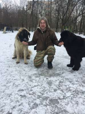 Дрессировка собак в Москве