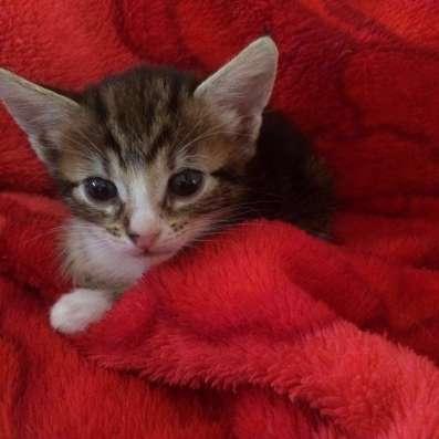 Милые котята даром в Краснодаре Фото 4