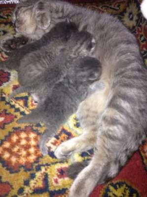 Отдам котят в хорошие руки ❤️ в Воронеже Фото 1