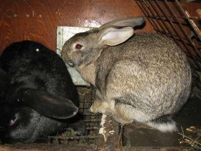кроликов