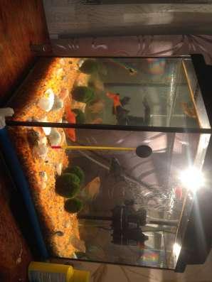 Продам аквариум в Москве Фото 1
