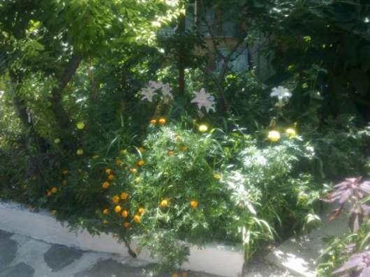 Отдых в Феодосии без посредников в частном секторе в г. Феодосия Фото 3