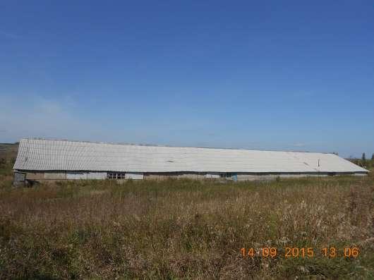 Ферма/ранчо 1600кв. м. на 200голов КРС + 55 соток земли