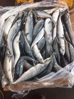 Производство, переработка рыбы и морепродуктов в Москве Фото 1