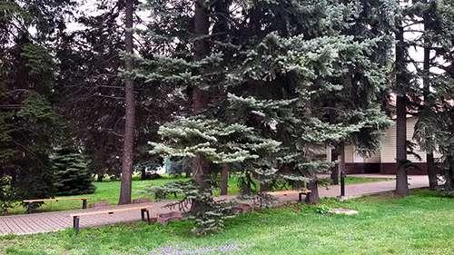 Санаторно-курортное лечение в г. Алматы Фото 4
