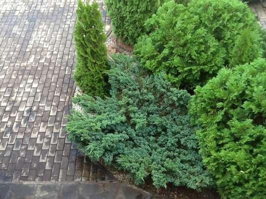 Коттедж 300 м2 с камином, сауной, домиком, и 67 деревьевьми