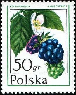 Марки 50gr 90gr Польша 1977 год Лесные ягоды в Москве Фото 1