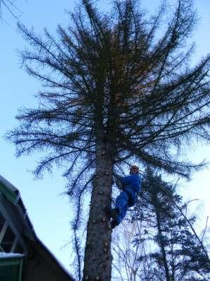 Спилить, удалить дерево. Удалить пни