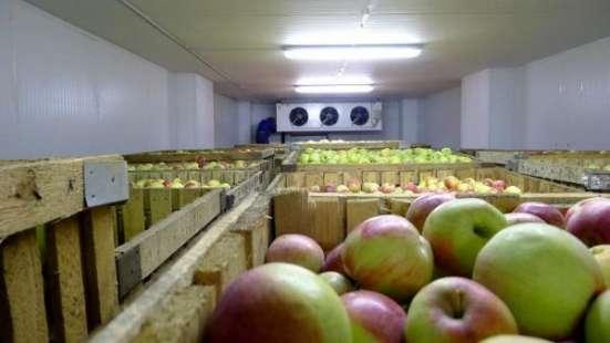 Монтаж холодильных камер для хранения яблок в Крыму. в г. Симферополь Фото 1