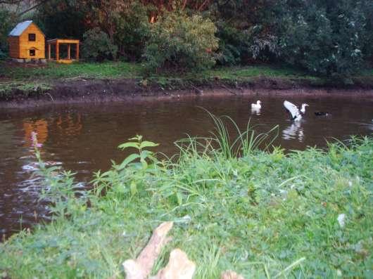 База отдыха, гостевой дом, баня на дровах и шунгитовой воде
