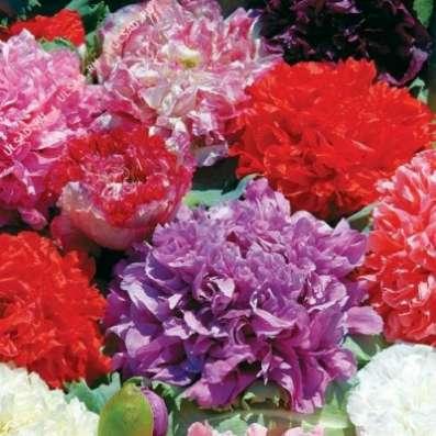 Семена разных цветов-самосеек
